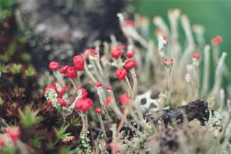 photos_spring1