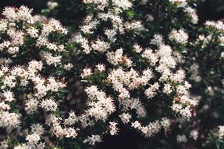 photos_spring3