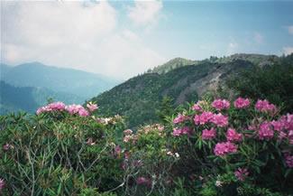 photos_spring5