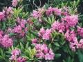 photos_spring2