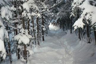 photos_winter5