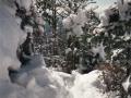 photos_winter3